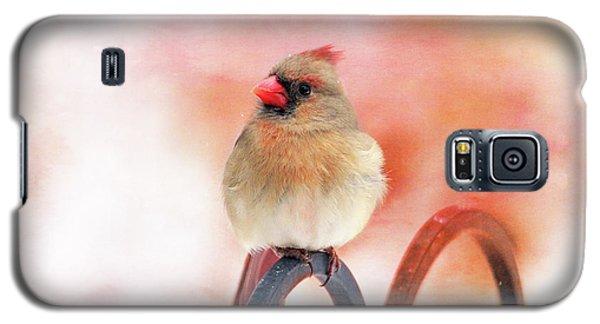 Pretty Cardinal Galaxy S5 Case