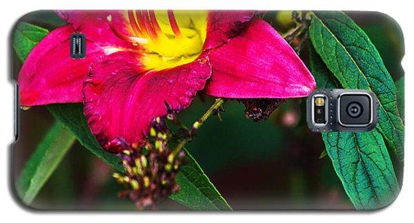 Pretty Flower Galaxy S5 Case by Edward Peterson