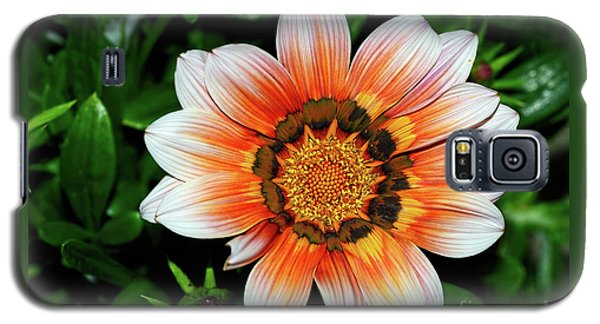 Galaxy S5 Case featuring the photograph Pretty Gazania By Kaye Menner by Kaye Menner
