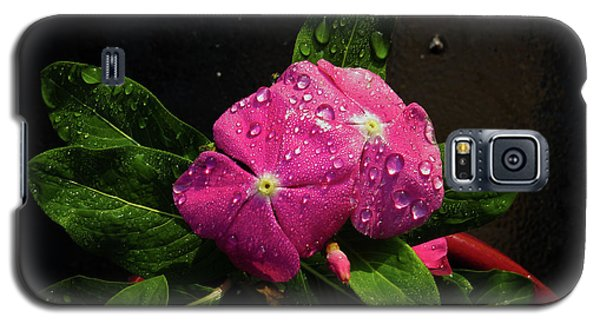 Galaxy S5 Case featuring the photograph Pretty In Pink by Douglas Stucky
