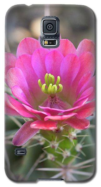 Galaxy S5 Case featuring the photograph Pretty In Pink Hedgehog  by Saija Lehtonen