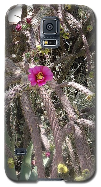 Flower Is Pretty In Pink Cactus Galaxy S5 Case