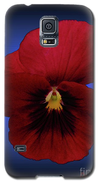 Galaxy S5 Case featuring the photograph Pretty Pansy by Donna Brown