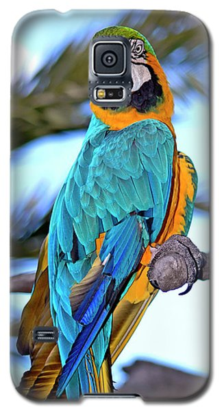 Pretty Parrot Galaxy S5 Case