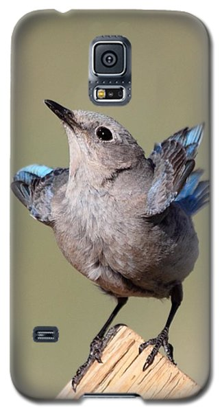Pretty Pose Galaxy S5 Case by Shane Bechler