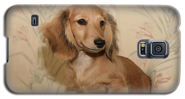 Pretty Pup Galaxy S5 Case