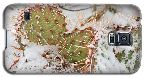 Galaxy S5 Case featuring the photograph Prickley Pear Cactus by Donna Greene