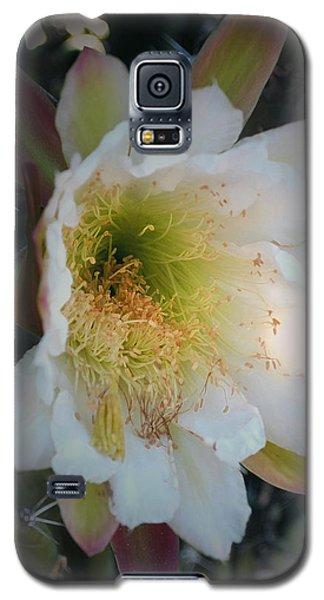 Prickley Pear Cactus Galaxy S5 Case