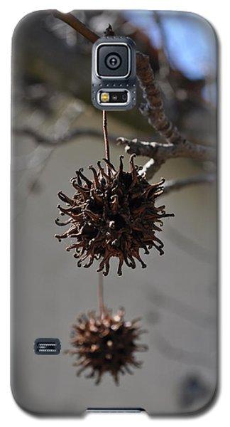 Prickly Liquidamber Pod Galaxy S5 Case
