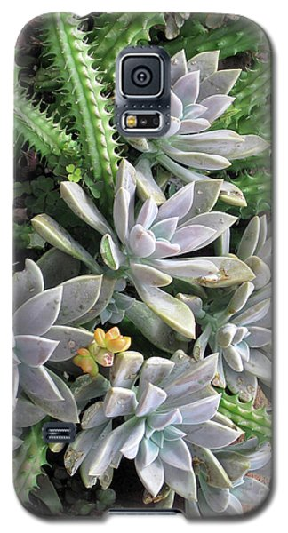 Galaxy S5 Case featuring the photograph Prickly One by Ken Frischkorn