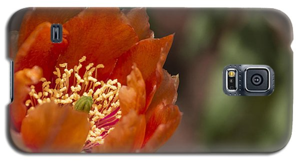 Galaxy S5 Case featuring the photograph Prickly Pear Bloom by Laura Pratt
