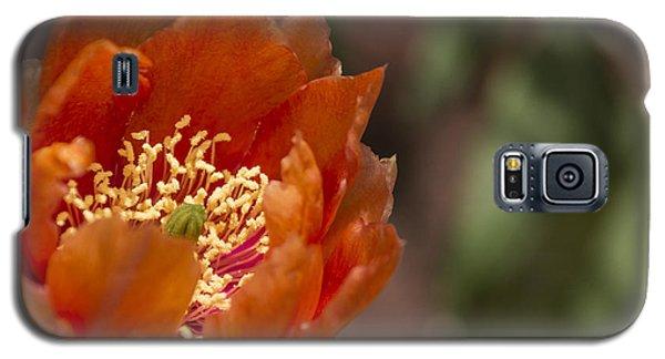 Prickly Pear Bloom Galaxy S5 Case