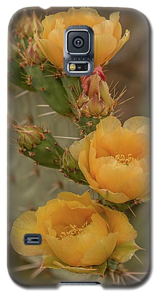Prickly Pear Blossom Trio Galaxy S5 Case
