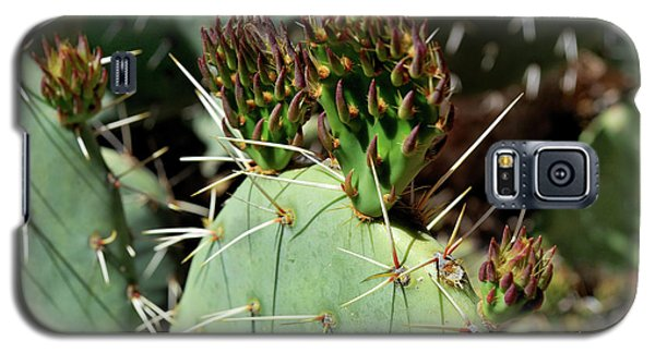 Prickly Pear Buds Galaxy S5 Case