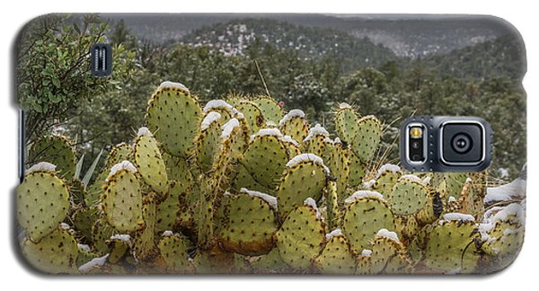 Cactus Country Galaxy S5 Case