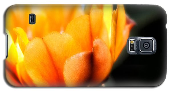 Galaxy S5 Case featuring the photograph Prickly Pear Flower by Lynn Geoffroy
