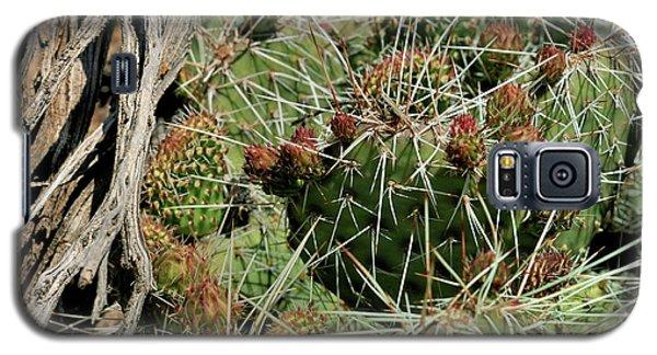 Prickly Pear Revival Galaxy S5 Case
