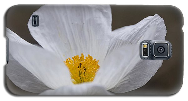 Galaxy S5 Case featuring the photograph Prickly Poppy by Laura Pratt