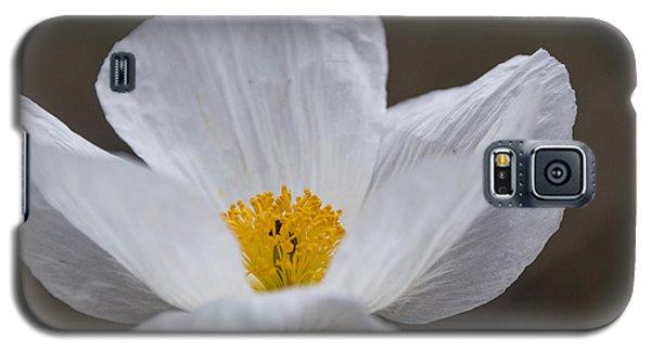 Prickly Poppy Galaxy S5 Case by Laura Pratt