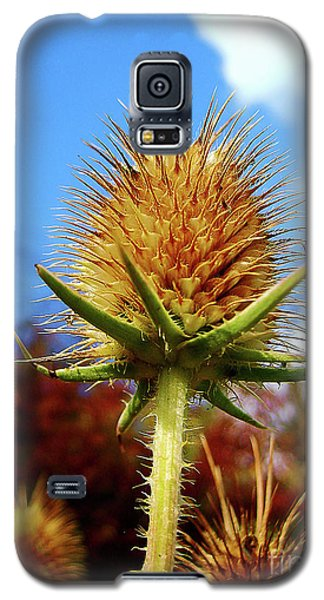 Galaxy S5 Case featuring the photograph Prickly Thistle by Nina Ficur Feenan