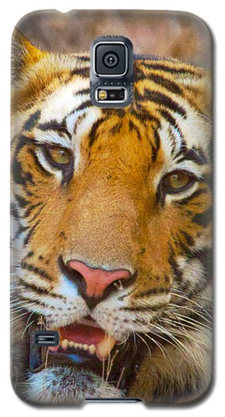 Prime Tiger Galaxy S5 Case