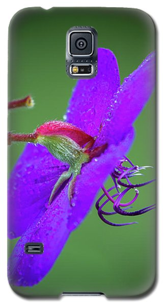 Galaxy S5 Case featuring the photograph Princess Flower, Nuwara Eliya, 2012 by Hitendra SINKAR