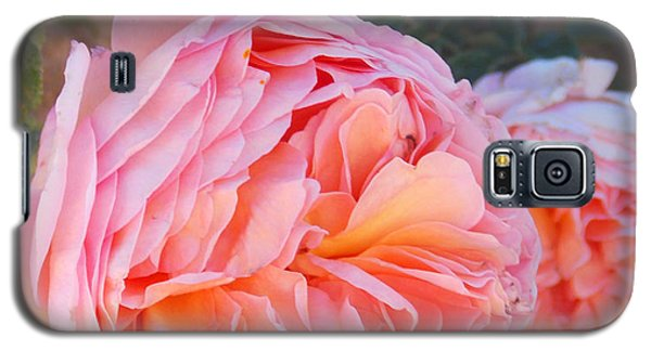 Princess Margret Fragrant Climbing Roses Galaxy S5 Case by Anastasia Savage Ealy