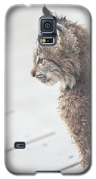 Profile In Kitten Galaxy S5 Case