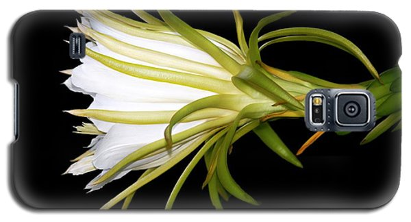 Profile Night Blooming Cereus Galaxy S5 Case