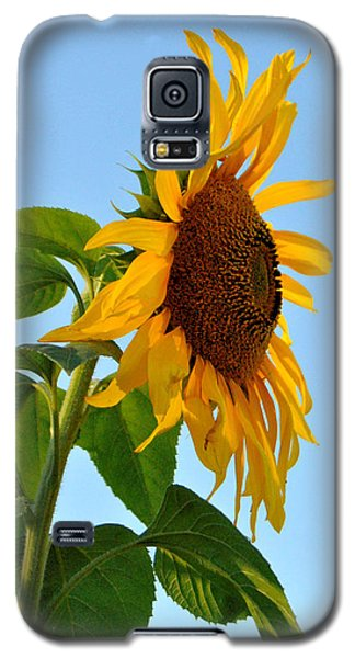 Profile Of A Sunflower Galaxy S5 Case by Kathleen Sartoris