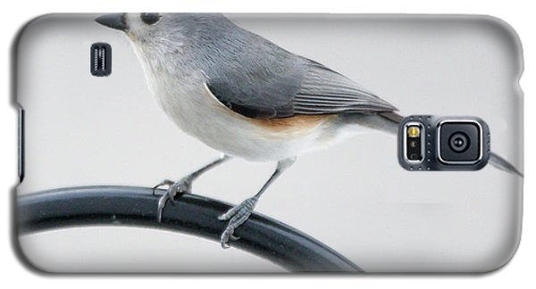 Profile Of A Tufted Titmouse Galaxy S5 Case