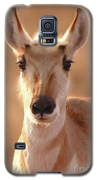 Galaxy S5 Case featuring the photograph Pronghorn Antelope Doe In Soft Light by Max Allen