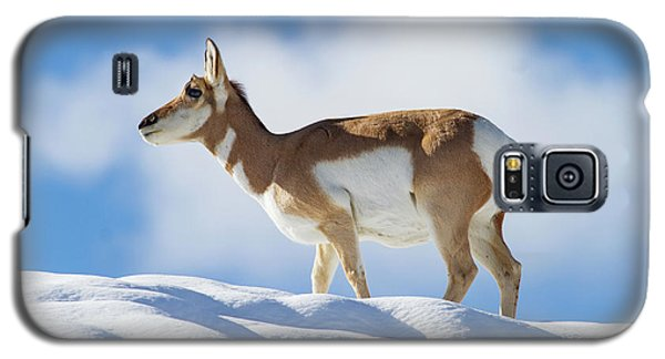 Pronghorn Doe On Snowy Ridge Galaxy S5 Case