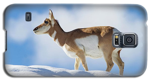 Pronghorn Doe On Snowy Ridge Galaxy S5 Case
