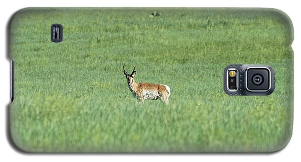 Pronghorn In A Sea Of Green Galaxy S5 Case