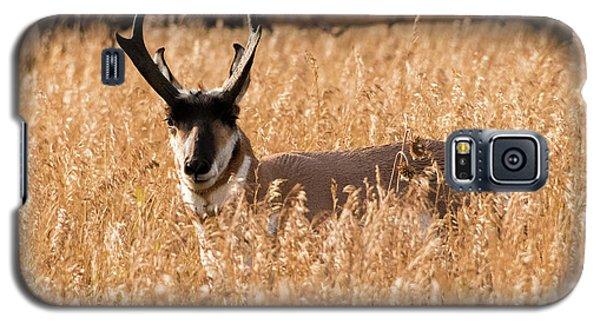 Pronghorn Galaxy S5 Case