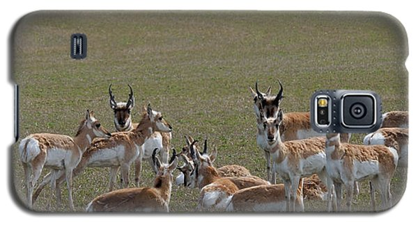 Galaxy S5 Case featuring the photograph Pronghorns On Alert by Kae Cheatham