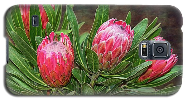 Galaxy S5 Case featuring the photograph Proteas In Bloom By Kaye Menner by Kaye Menner