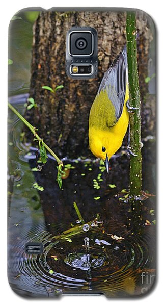 Prothonotary Warbler Galaxy S5 Case