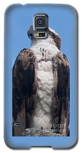 Proud Hawk Galaxy S5 Case