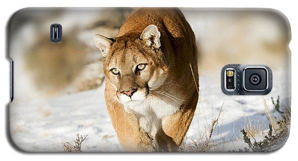 Prowling Mountain Lion Galaxy S5 Case