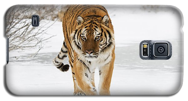 Prowling Tiger Galaxy S5 Case