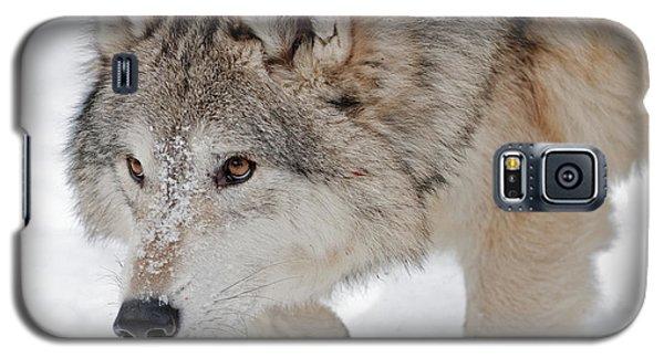 Prowling Wolf Galaxy S5 Case