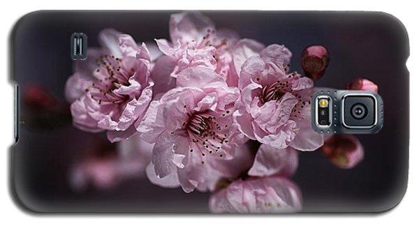 Prunus A Pink Spring Galaxy S5 Case
