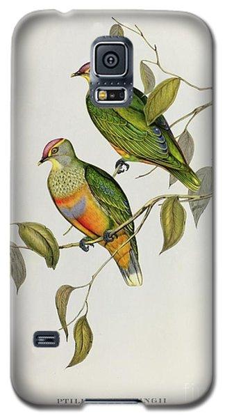 Audubon Galaxy S5 Case - Ptilinopus Ewingii by John Gould