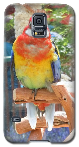 Multi-color Pudgy Budgie Galaxy S5 Case