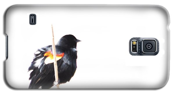 Puffed Up Red-winged Blackbird Galaxy S5 Case