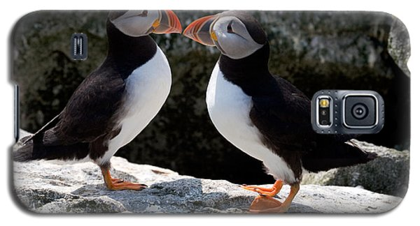 Puffin Love Galaxy S5 Case by Brent L Ander