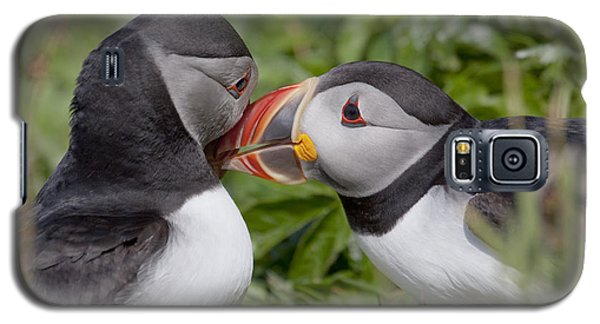 Puffin Love Galaxy S5 Case