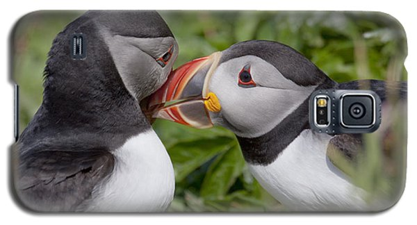 Puffin Love Galaxy S5 Case